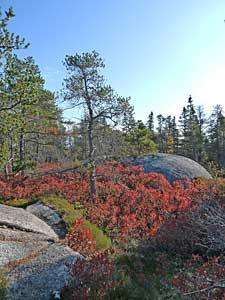 JackPine/Broom Crowberry Barrens