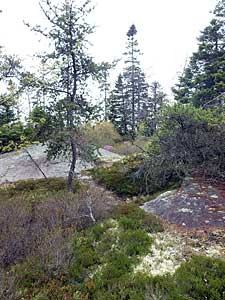 The magical Jack Pine/Broom Crowberry barrens