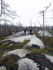 Traversing the barrens that burned in 2009